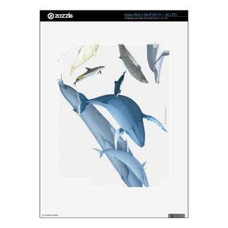 Ballenas iPad 3 Pegatina Skin