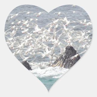 Ballenas jorobadas, gaviotas en Seward, Alaska Pegatina En Forma De Corazón