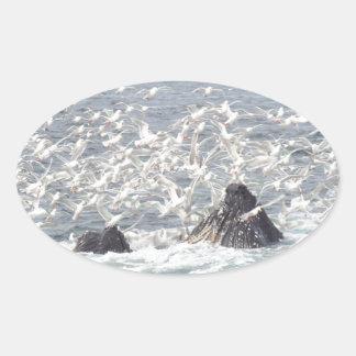 Ballenas jorobadas, gaviotas en Seward, Alaska Pegatina Ovalada