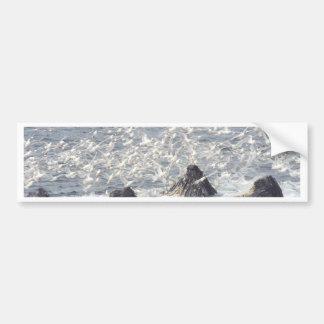 Ballenas jorobadas, gaviotas en Seward, Alaska Pegatina Para Auto
