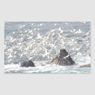 Ballenas jorobadas, gaviotas en Seward, Alaska Pegatina Rectangular