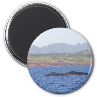 Ballenas jorobadas hawaianas imán redondo 5 cm