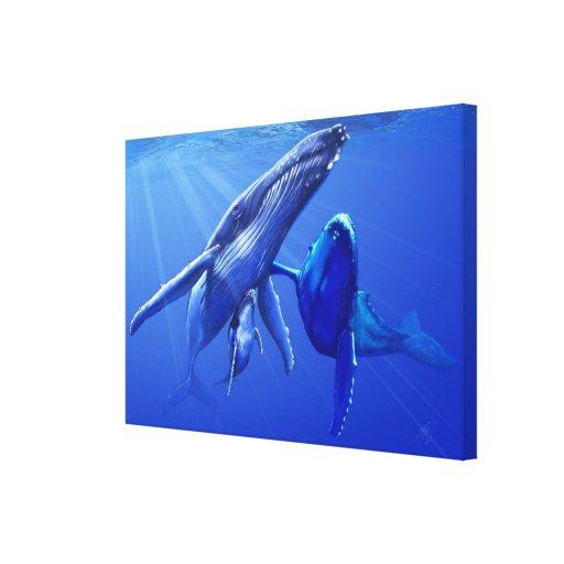 Ballenas jorobadas impresión en lienzo estirada