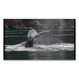 Ballenas jorobadas tarjetas de visita magnéticas (paquete de 25)