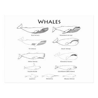 Ballenas (línea ejemplos del arte) tarjeta postal