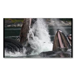 ballenas tarjetas de visita magnéticas (paquete de 25)