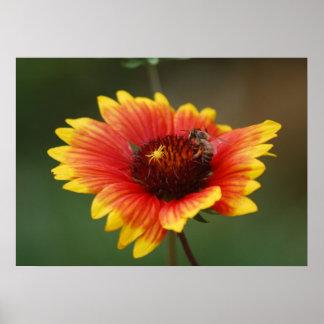 Ballet de la araña y la abeja posters