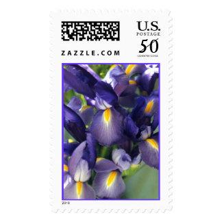 Ballet Iris Photo Stamp