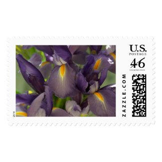 Ballet Purple Irises Flower Postage Stamps