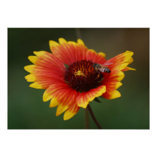 Ballet y la abeja 2 de la araña impresiones
