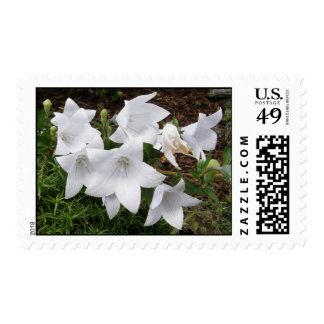 Balloon Flower/Chinese Bellflower Postage Stamps