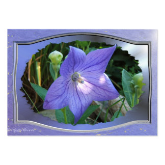 Balloon Flower w/frame ~ ATC card Large Business Cards (Pack Of 100)