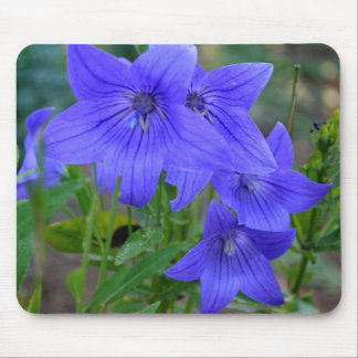Balloon Flowers Mouse Pad