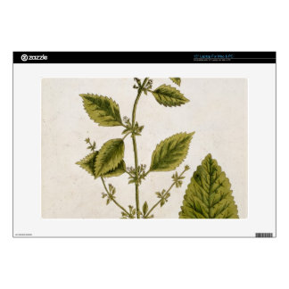 """Balm, plate 27 from 'A Curious Herbal', published 15"""" Laptop Skin"""