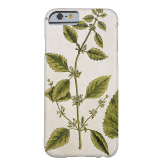Balm, plate 27 from 'A Curious Herbal', published Barely There iPhone 6 Case