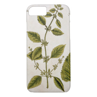 Balm, plate 27 from 'A Curious Herbal', published iPhone 7 Case