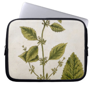 Balm, plate 27 from 'A Curious Herbal', published Laptop Sleeve