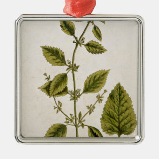 Balm, plate 27 from 'A Curious Herbal', published Metal Ornament