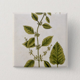 Balm, plate 27 from 'A Curious Herbal', published Pinback Button