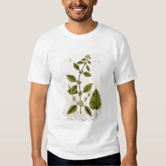 Balm, plate 27 from 'A Curious Herbal', published Tee Shirt