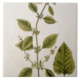 Balm, plate 27 from 'A Curious Herbal', published Large Square Tile