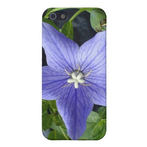 Baloon Flower Blue Cover For iPhone 5