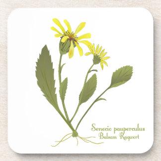 Balsam Ragwort Prairie Flower Coasters