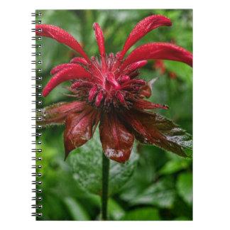 Bálsamo de la Cuaderno-Abeja Cuadernos