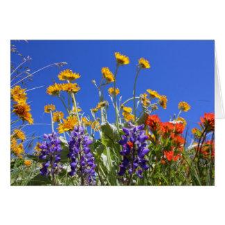 Balsamroot, Lupine and Paintbrush Card