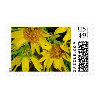 Balsamroot Stamps
