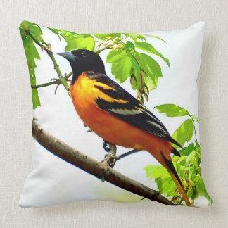 Baltimore Oriole 1 Pillows