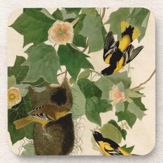 Baltimore Oriole Audubon raro Posavasos De Bebidas