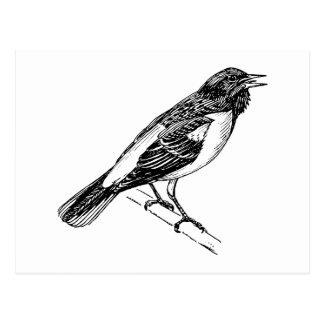 Baltimore Oriole Bird Art Postcard