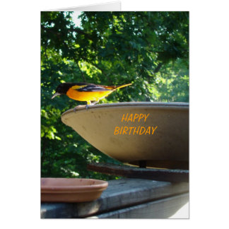 Baltimore Oriole, Birthday Greeting Card