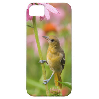 Baltimore Oriole iPhone 5 Cases
