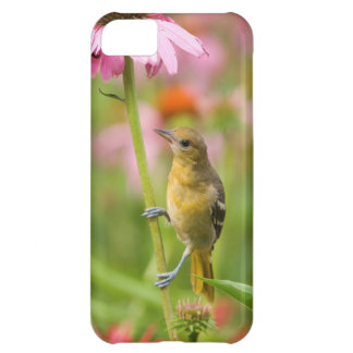 Baltimore Oriole iPhone 5C Cover