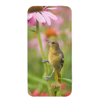Baltimore Oriole iPhone 5 Pouch