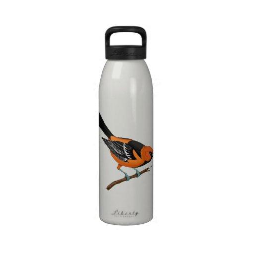 Baltimore Oriole en una ramita Botella De Beber