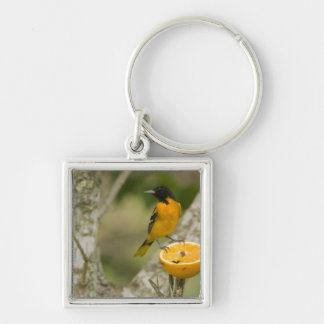 Baltimore Oriole feeding on orange, Icterus Keychain