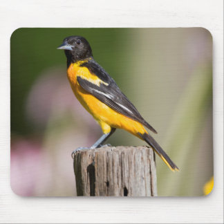 Baltimore Oriole female in flower garden Mouse Pad