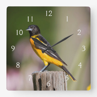 Baltimore Oriole female in flower garden Square Wall Clock