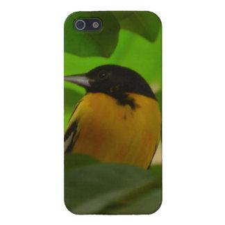 Baltimore Oriole iPhone 5 Carcasas