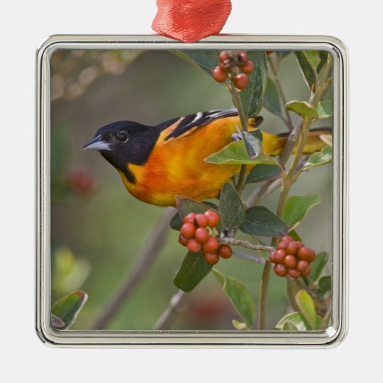 Baltimore Oriole Icterus galbula) adult male Metal Ornament
