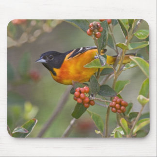 Baltimore Oriole Icterus galbula) adult male Mouse Pad