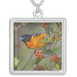 Baltimore Oriole Icterus galbula) adult male Silver Plated Necklace
