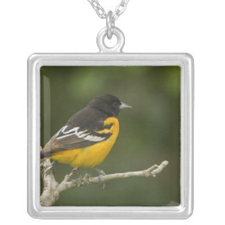 Baltimore Oriole, Icterus galbula, Coastal 2 Silver Plated Necklace