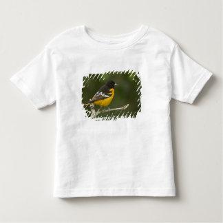 Baltimore Oriole, Icterus galbula, Coastal 2 Toddler T-shirt