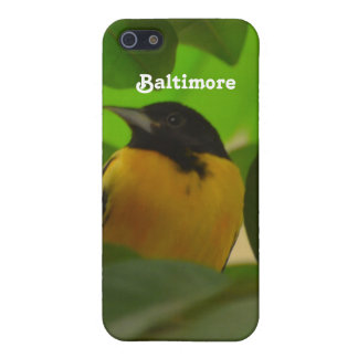 Baltimore Oriole Cover For iPhone 5/5S