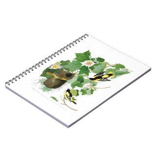 Baltimore Oriole John James Audubon Birds America Notebook