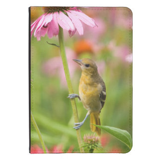 Baltimore Oriole Kindle Touch Case